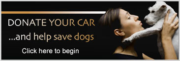 donate your car and help save dogs!